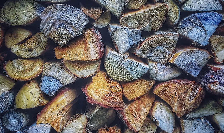 Iz šume posječeno drvo za ogrjev